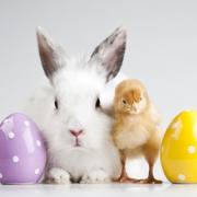 Óvjuk a húsvéti kisállatokat!