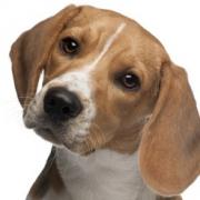 Mutasd a kutyád, megmondom ki vagy!- Árulkodó háziállatok