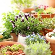 A leghatékonyabb szúnyogűző növények: Ezeket tartsd a balkonon!