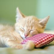 Ilyenek a hazai macskatartók! - derült ki a felmérésből