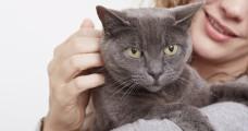 Sztárallűr, hiszti vagy valódi stressz? Segíts a cicádnak!