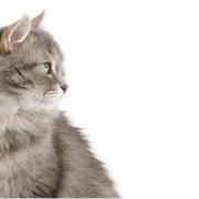 Hétvégén macskakiállítás!