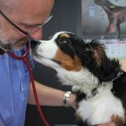 Terjed az étel- és környezeti allergia a kutyáknál