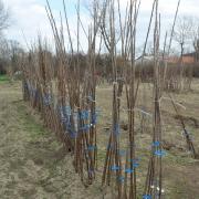 Gyümölcsfaültetési kisokos - 10 tipp az őszi ültetéshez