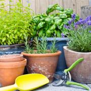 Ezek lesznek a legmenőbb kerti trendek idén