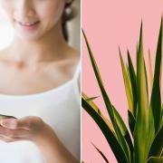 TOP hatóanyagok, amikre nyáron szomjazik az arcbőröd