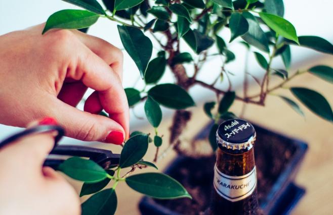 Így neveld a bonsaiodat – 5 tipp, hogy sokáig pompázzon a fácskánk