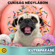 Kutyaparádé (6)