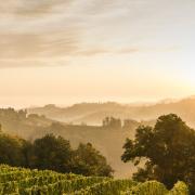 Különleges őszi rendezvénytippek Ausztria borvidékeiről